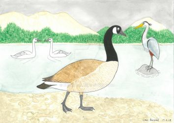 'Animal of the Week' - Canada Goose by Bushdog4