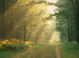 forest light by amait1
