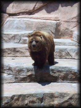 Grizzly Bear 2 by eetap