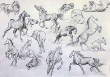 Practice 04 - Horse studies by AnaviTil