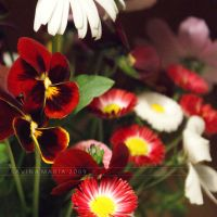 lovely flowers_90 by Marsulu