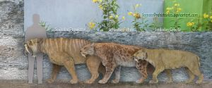 Smilodon species by SameerPrehistorica