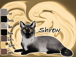 Shrew of Breeze's Camp - Code of the Forest by Jayie-The-Hufflepuff