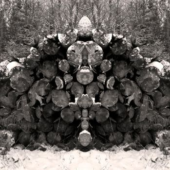 Log Pile by waterst