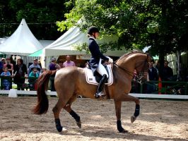 Dressage Passage or Piaffe seen from the side by LuDa-Stock
