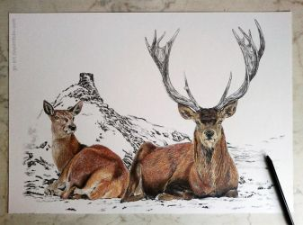Deers (commissioned) 3rd picture by GabrielGrob