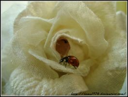 Ladybird on a petal by lamu1976