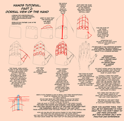 HANDS TUTORIAL, Dorsal View [Part 2] by Dex91
