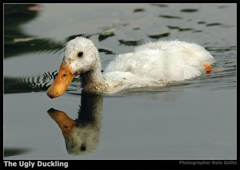 The Ugly Duckling by RoieG