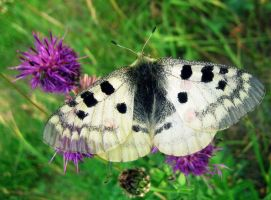 Butterfly by Puhra17