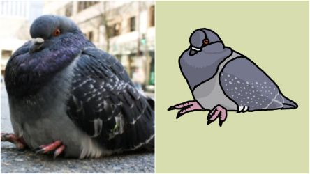 Fat Bird Pigeon Reference by Yojobubbles