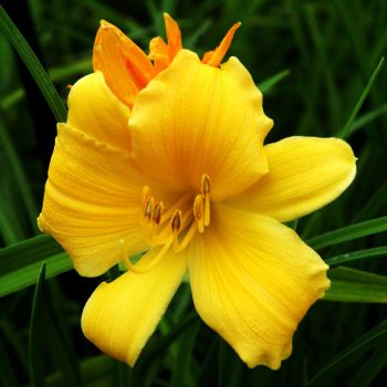 Happy Birth Day Lily by Earth-Hart
