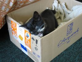 I Don't Like This Box by ermionedeverne