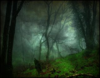 Magic forest by andarin