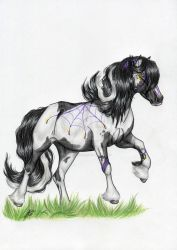 Gypsy Vanner by TheShiranja