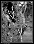 BLOOD AND BONE (2009 11260012 #1a BW) by Chattering-Magpie