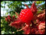Red Raspberry by Sir-Isac-Vanillabean
