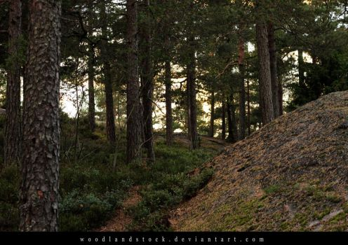 forest 005 by woodlandSTOCK
