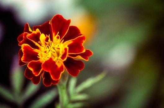 Blume 4 by HighStatic