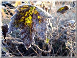 First frost this autumn... by Yancis