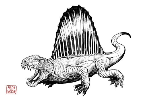Dimetrodon by aaronjohngregory