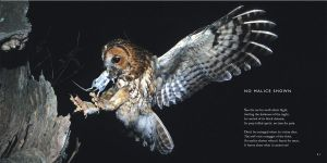 Owl Poem: No Malice Shown -Owls Poetry by CliveBlake