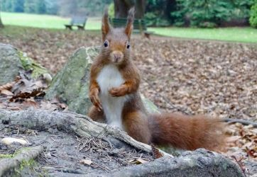 A rare pose by Squirrels2poet2queen