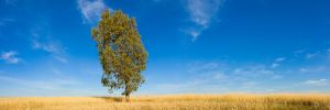 Lone Tree by hougaard