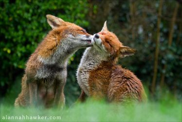 Foxy Kisses by Alannah-Hawker