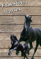 Friesian Horse Ad by WendiJo129