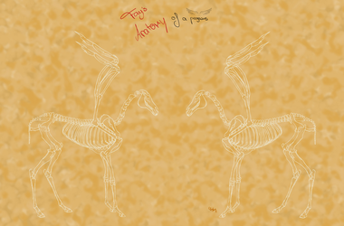 Pegasus Anatomy - skeleton without explanations by Death-of-Fantasy