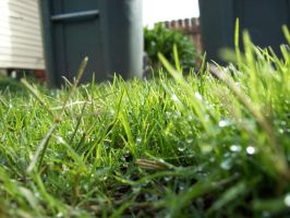 The Grass Is Greener.. by optimisticxpessimist
