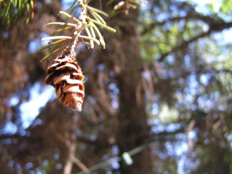 Lonely pinecone by itsumoxx