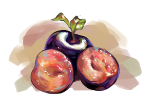 Plums - Study by shvau4