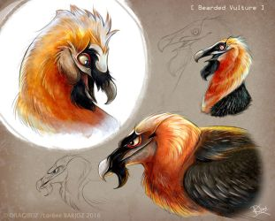 Bearded Vultures by Dragibuz