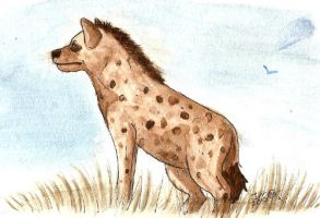 Spotted Hyena by Jeis