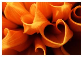 The Heart of a Dahlia by malore