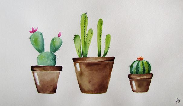 cacti by Acrisa