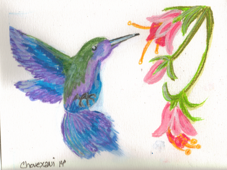 Humming Bird Water Color by ChovexaniArt