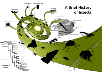 A Brief History of Insects by darkestnight