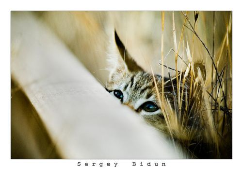 Peeking Over Into the Wild... by sergey1984