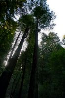 In Muir Woods 7 by Datasmurf