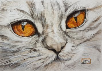 World Watercolor Month - Day 10 (Golden-eyed Cat) by Harmony1965