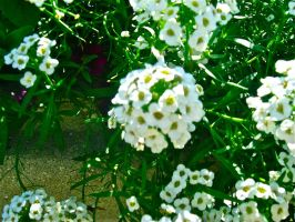 White Flowers by xDNarnian