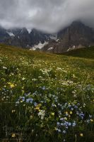 Wildflowers and Storm by Dave-Derbis