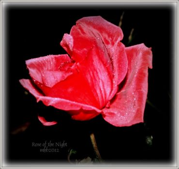 Rose of the Night by MagicBlanche
