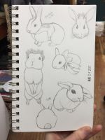 Bunnies! by grenouille-rousse