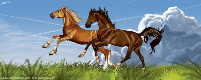 Gallop in the field by ClaireLyxa