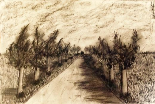 Row of Trees by TheEdamame