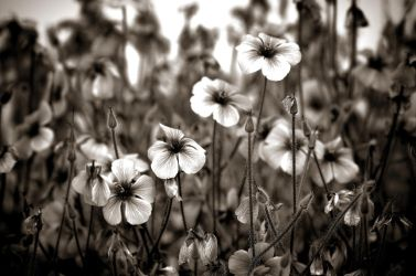 Colorless. by Phototubby